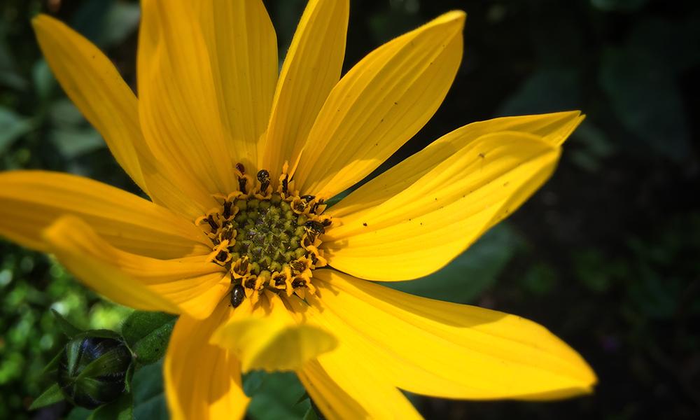 Sue Lindley Garden Design Photography