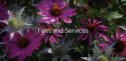 fees and services design